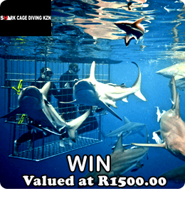 Shark Cage Diving KZN