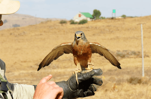 Dullstroom Bird of Prey and Rehabilitation Centre | Fun-Tastic Prize