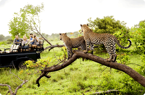 Southern Circle Tours and Safaris | Mega Win