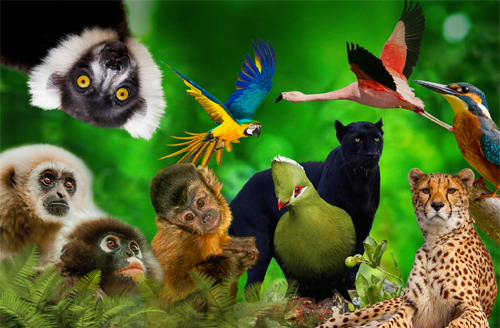 The South African Animal Sanctuary Alliance| Fun-Tastic Prize